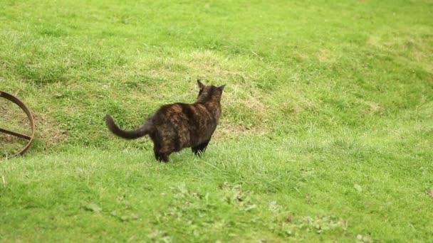 fekete macska, a zöld fű