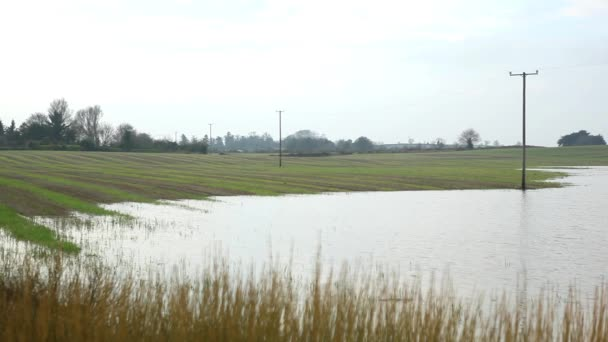 flooded agriculture field