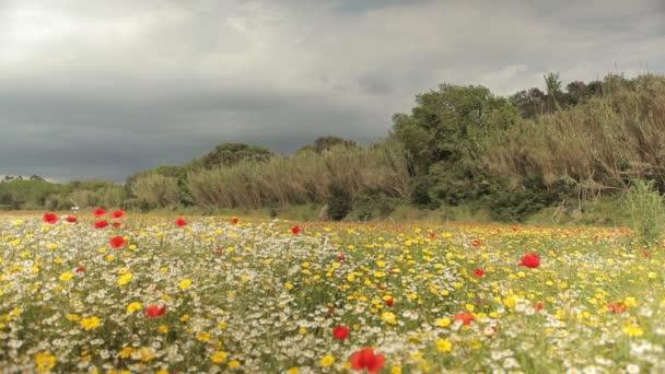 Barevné květy pole