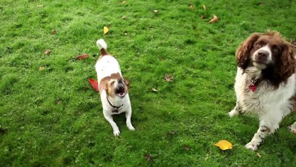 dva psi sedí na trávě