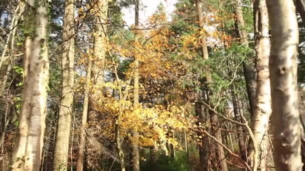 Podzimní příroda lesní