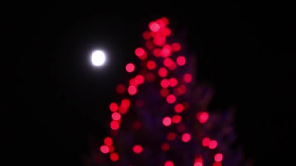 vánoční stromky v noci