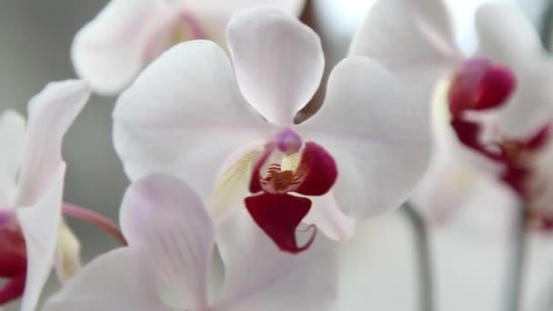 schöne rosa und weiße Orchideen