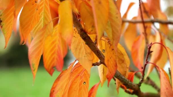gyönyörű őszi fa