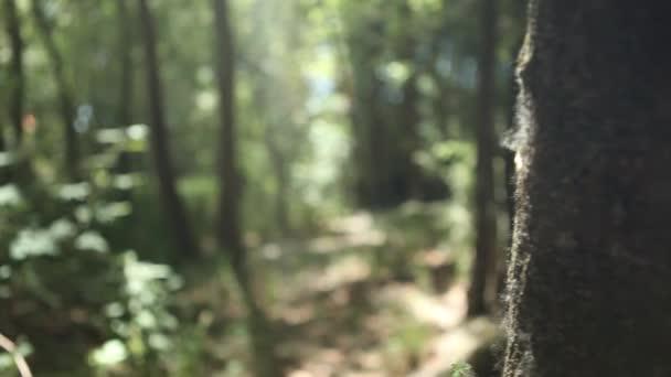 Dívka procházky v lese se psem