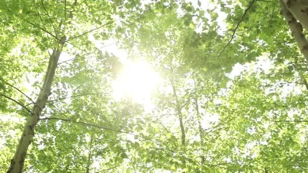 Suns Rays Through Fingers