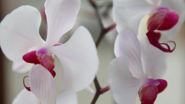Krásné růžové a bílé orchideje