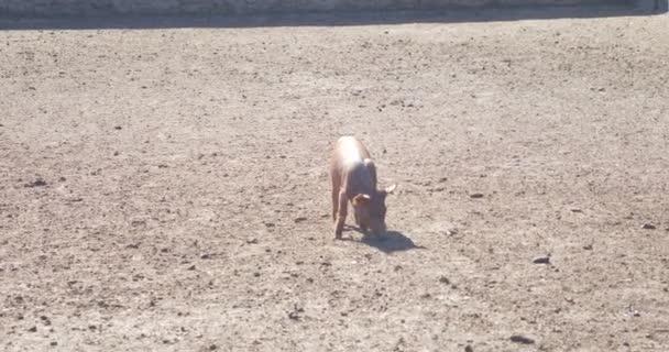 malá prasata v chlívku na farmě