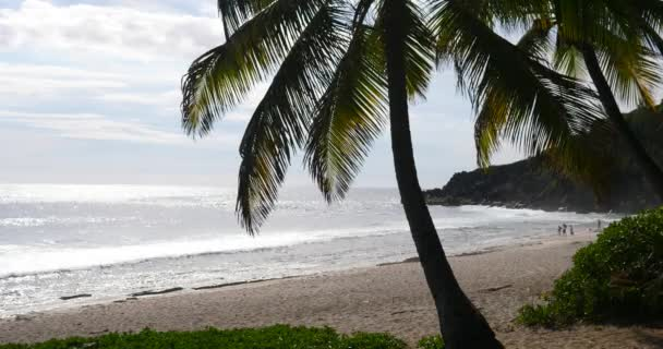 tropical beach and palm trees, Lush, green foliage along a tropical sea during a bright, sunny day, sandy paradise landscape, tourism relax meditation, explore holidays recreation cast away destination