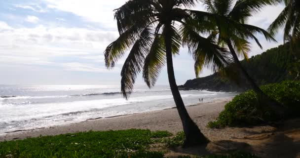 tropical beach and palm tree, Lush, green foliage along a tropical sea during a bright, sunny day, sandy paradise landscape, tourism relax meditation, explore holidays recreation cast away destination
