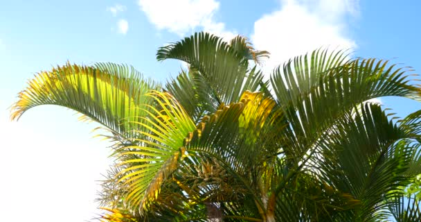 Palm trees, sunny tropical holiday weather with blue sky