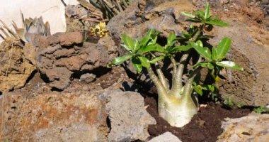 a botanikus kert, zöld trópusi növények kaktusz