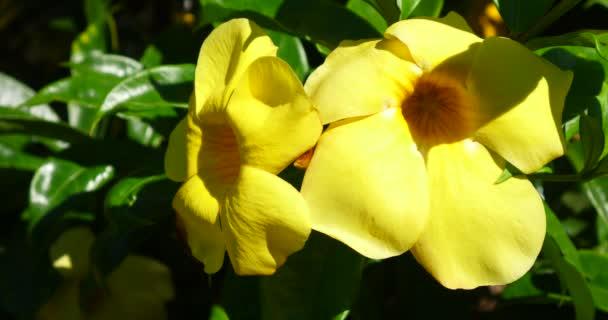 Tropických krásné barevné květiny v slunečný letní den, bujnou tropickou vegetací