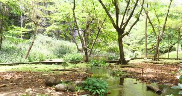 tropický les a řeka vegetace s vodopádem