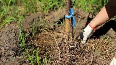 Mest Voor Tuin : Vergisting van dierlijke mest compost thee uit mest beste tuin