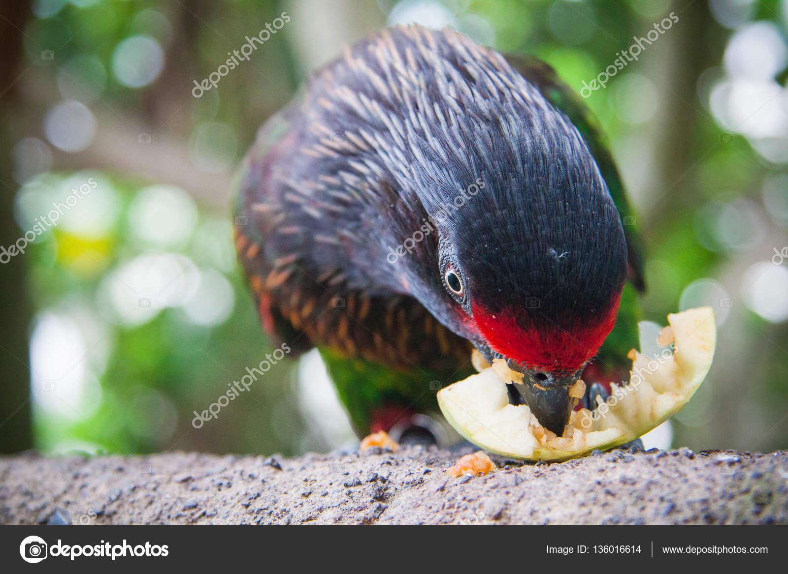 Wildlife In Bali Birds And Reptiles Park Stock Photo C Transurfer