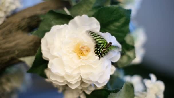 Fekete és zöld pillangó a virág