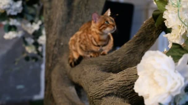 Domestic Bengal Cat On Branch