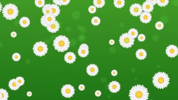 zelené pozadí s sedmikrásky