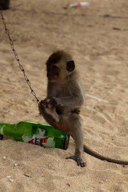 little monkey is sitting on a beer bottle