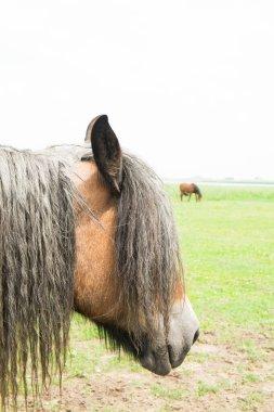 European wild horses