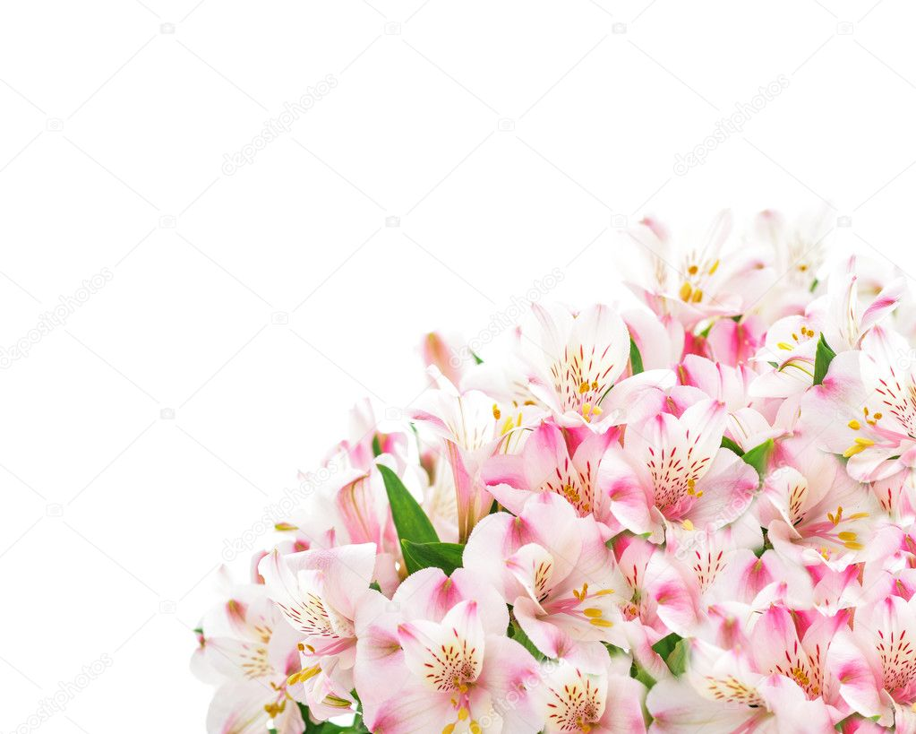 Pink flowers on white background stock photo svetlanafedoseeva pink flowers on white background stock photo 126499878 dhlflorist Image collections