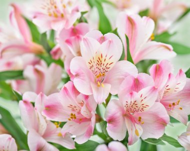 Delicate pink flowers.