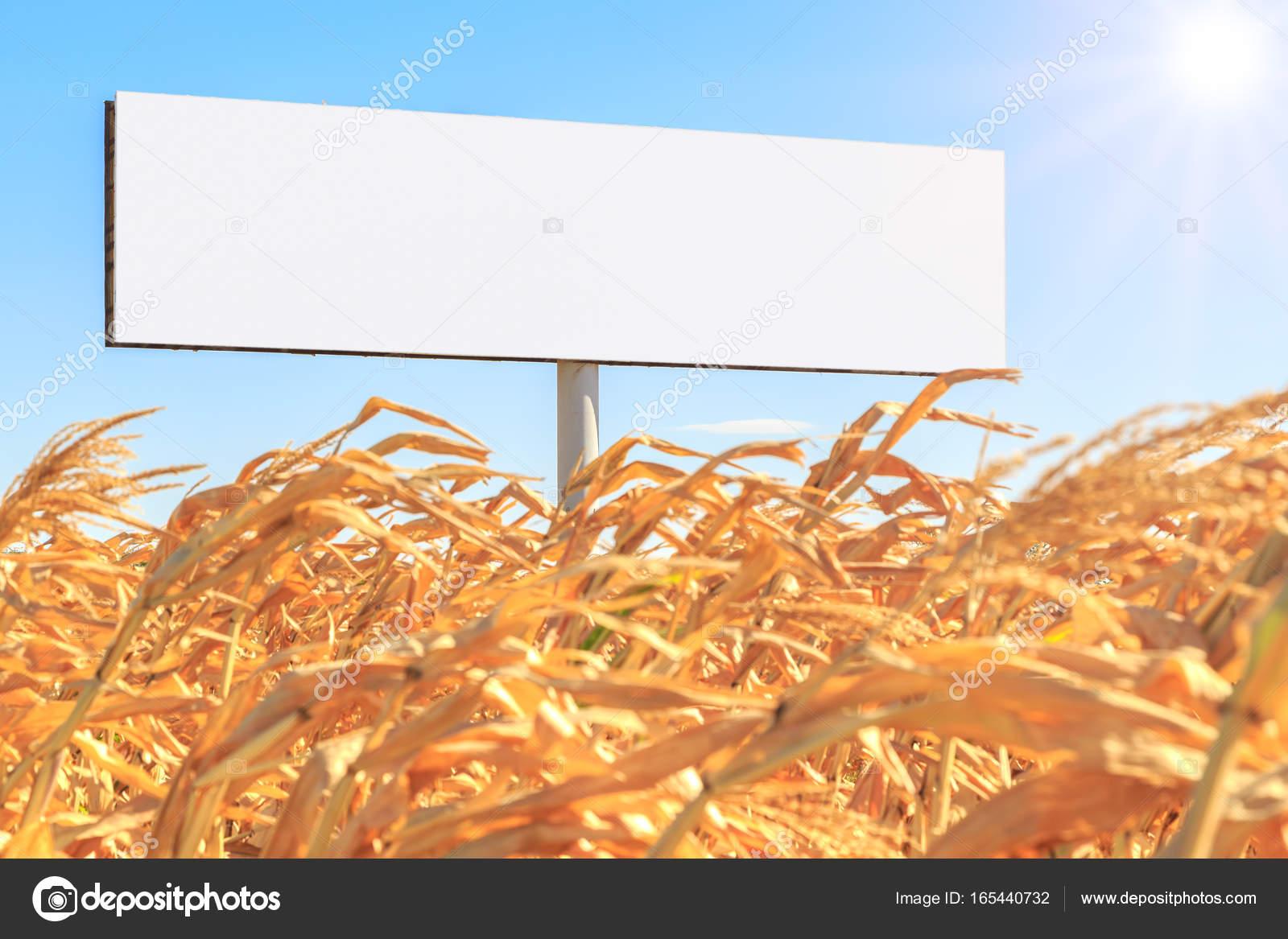 Plantilla del cartel blanco vacío forma rectangular en un campo de ...