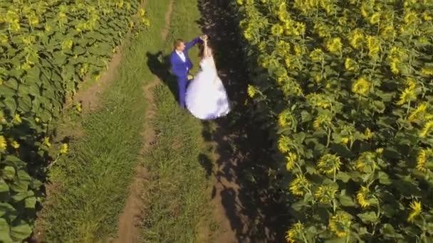 Pár v lásce chůzi vedle slunečnicová pole v letním dni. Letecké záběry
