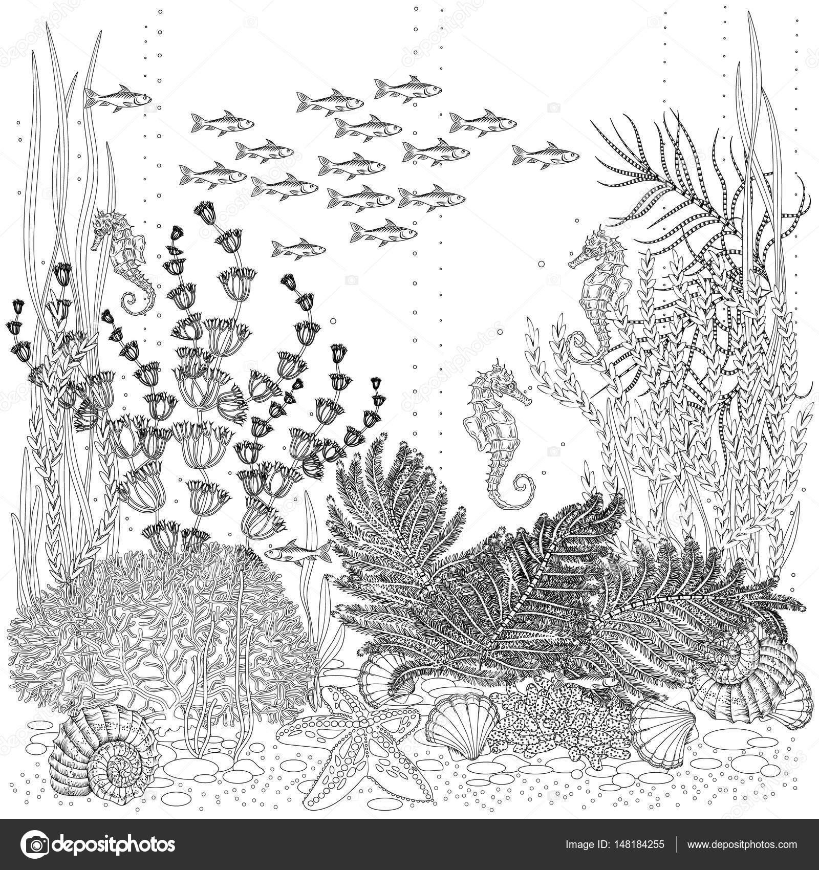 Disegni Fondali Marini Da La Flora E La Fauna Dei Fondali Marini