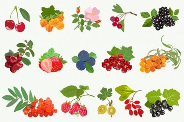 Set of ripe berries with leaves on white background. Vector