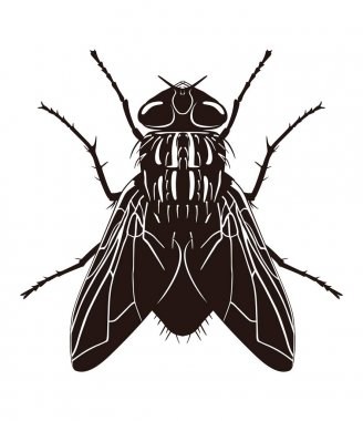 Dark silhouette of fly. View from above. Vector illustration