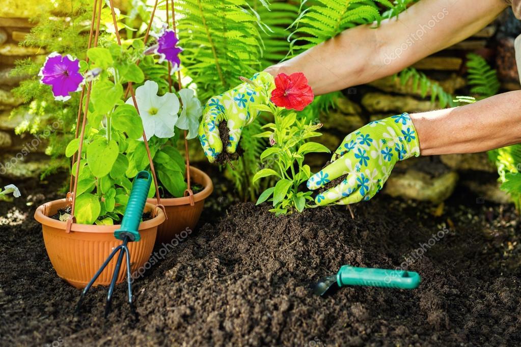 de jardinera en el jardn jardineros plantando flores de la mano u foto de