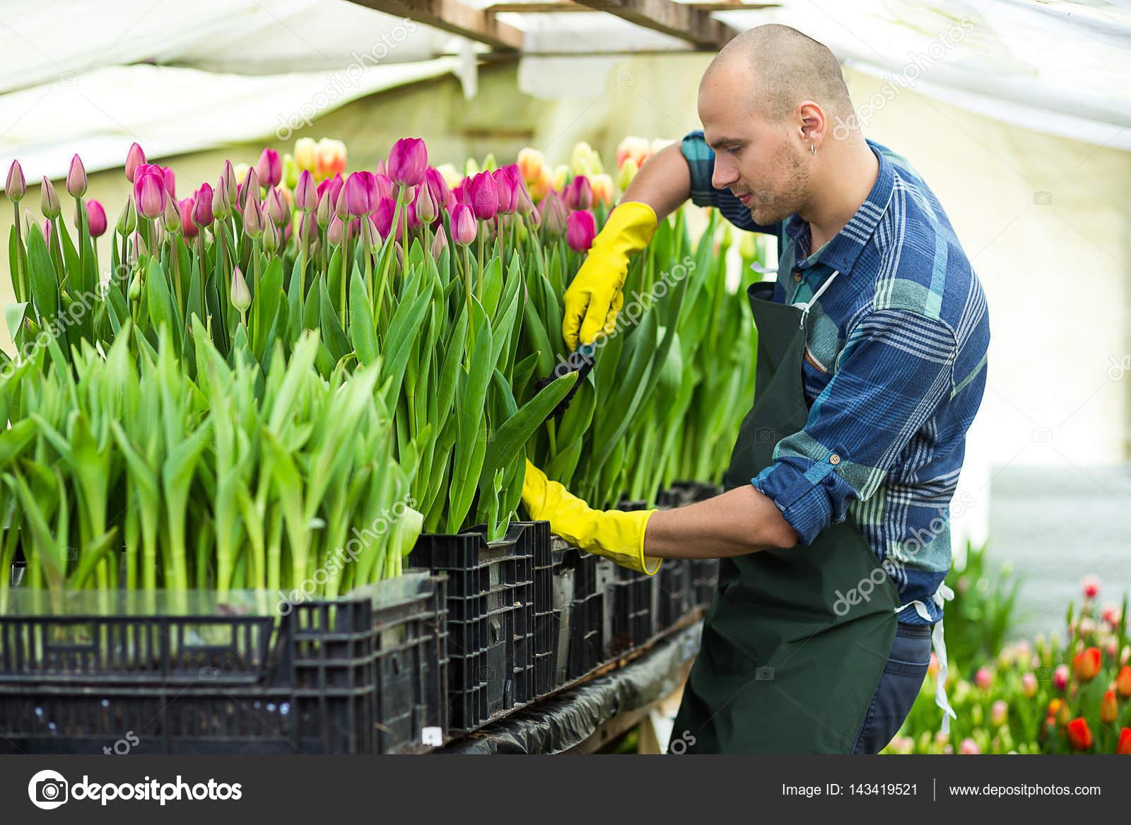 Jardinero de hombre con herramientas de jard n en el for Trabajo jardinero