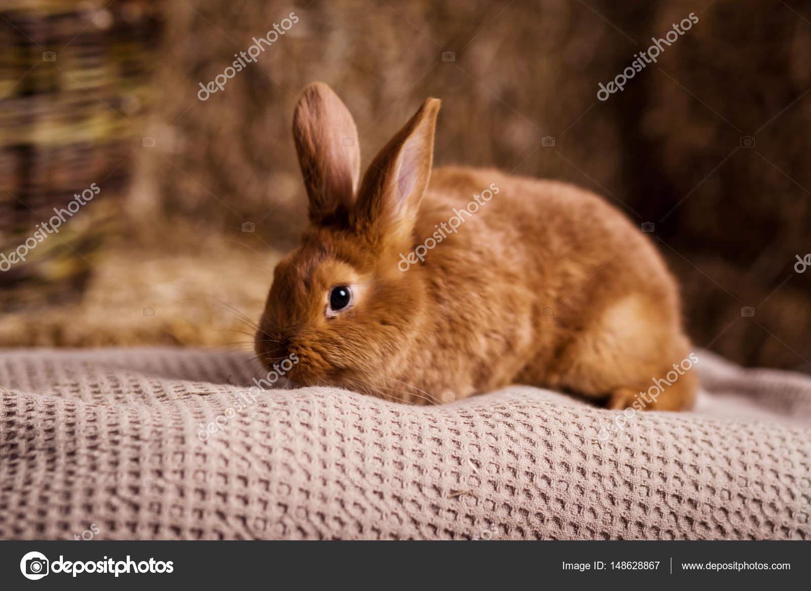 Legrační malý králík mezi velikonoční vajíčka v velur tráva 8138f693d1