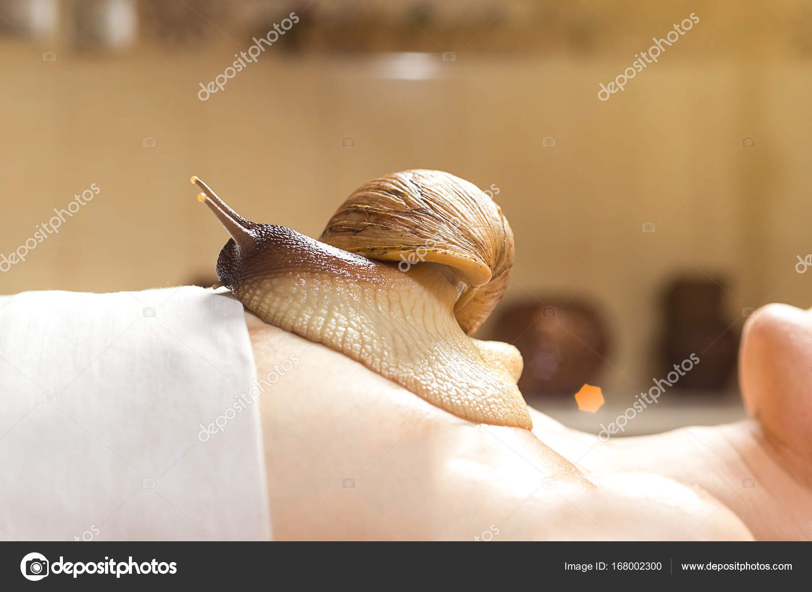 Achatina snails in cosmetology: how to use 6