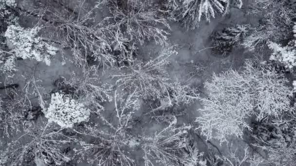 Zimní zasněžený les ve dne letecký pohled shora