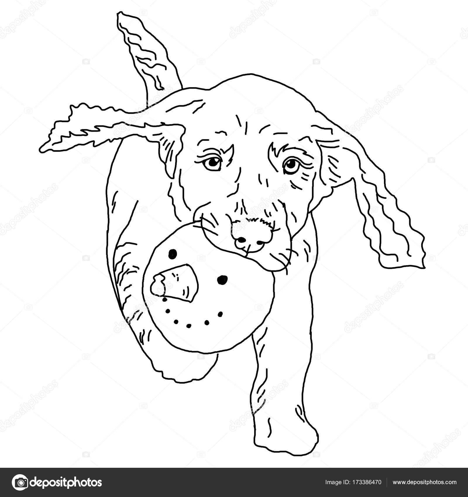 Hund Färbung, schwarz und weiß, die Zeichnung, der Hund trägt einen ...