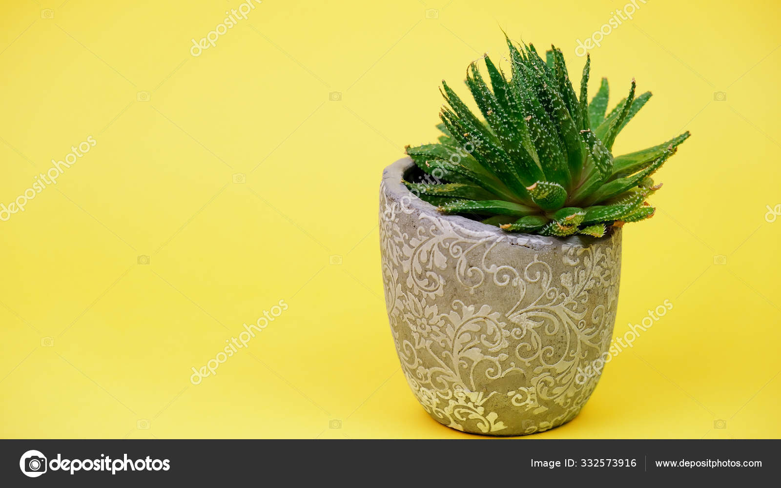 Succulent Plant In Pot On Vibrant Yellow Background Copy Space Banner 16x9 Format Stock Photo Image By C Mkhamidulina 332573916