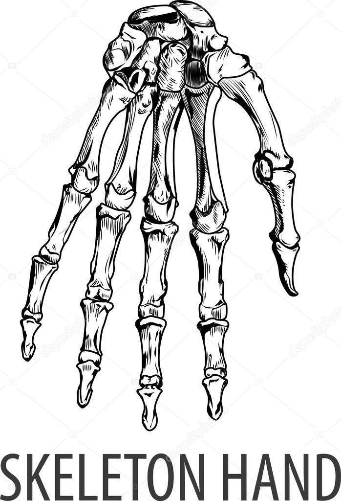 Mano de esqueleto de vectores — Vector de stock © magemasher #129913760