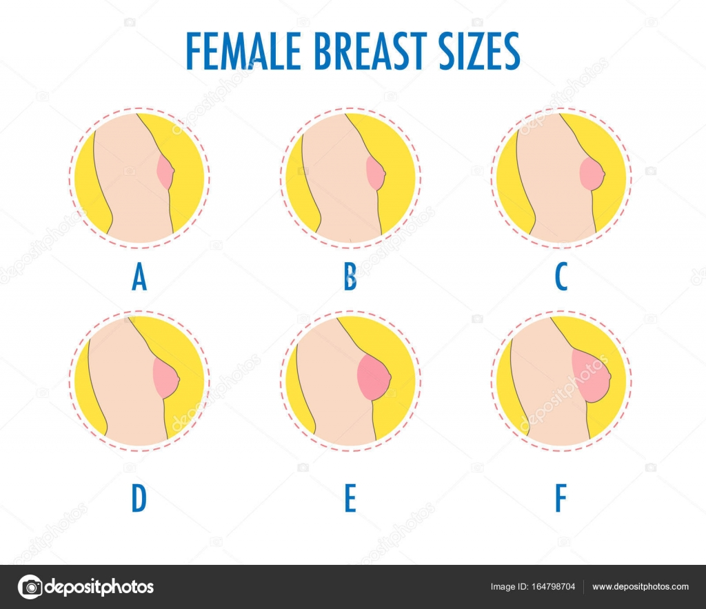 Boobs size images