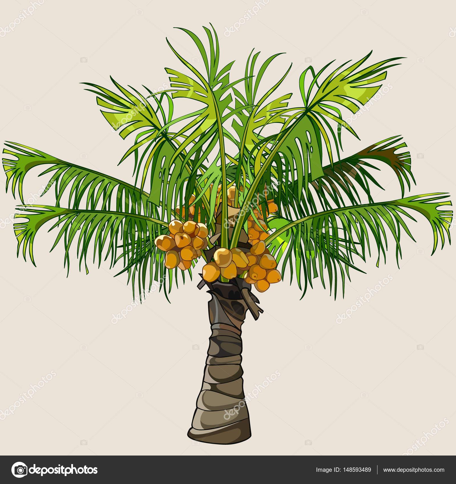 Dessin anim petit palmier avec noix de coco image - Palmier noix de coco ...