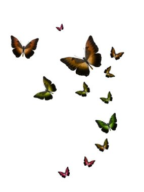 set of flying tropical butterflies isolated on a white background