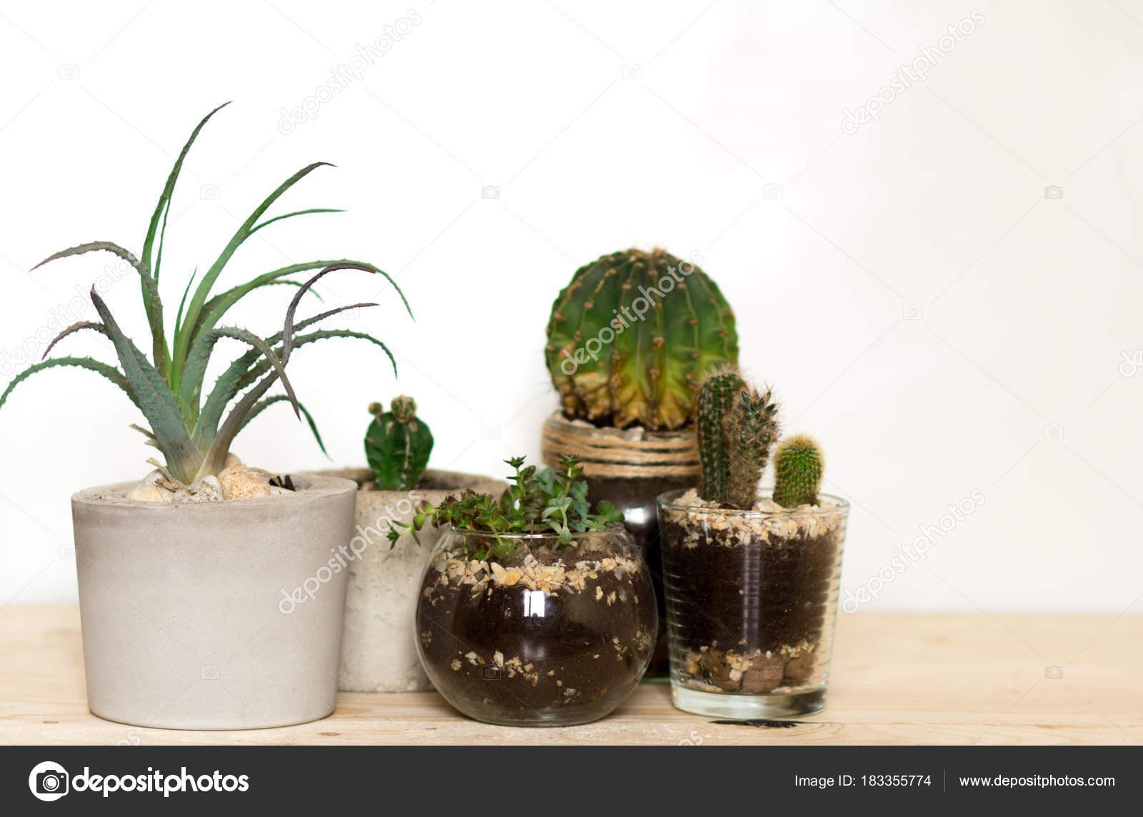 Piante grasse vaso moderno monimalistic cactus sulla for Piante arredamento moderno