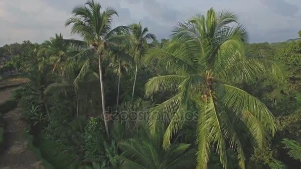 Luftaufnahme eines Waldes auf Bali