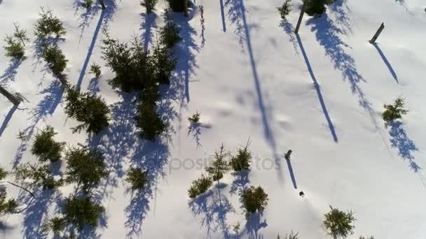Zimní krajina v polské hory