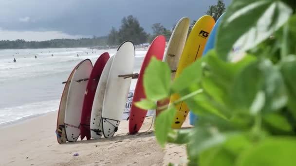 Zobrazení barevných surfař desek na písečné pláže Tropical island s palmami a modrá obloha na pobřeží Srí Lanky