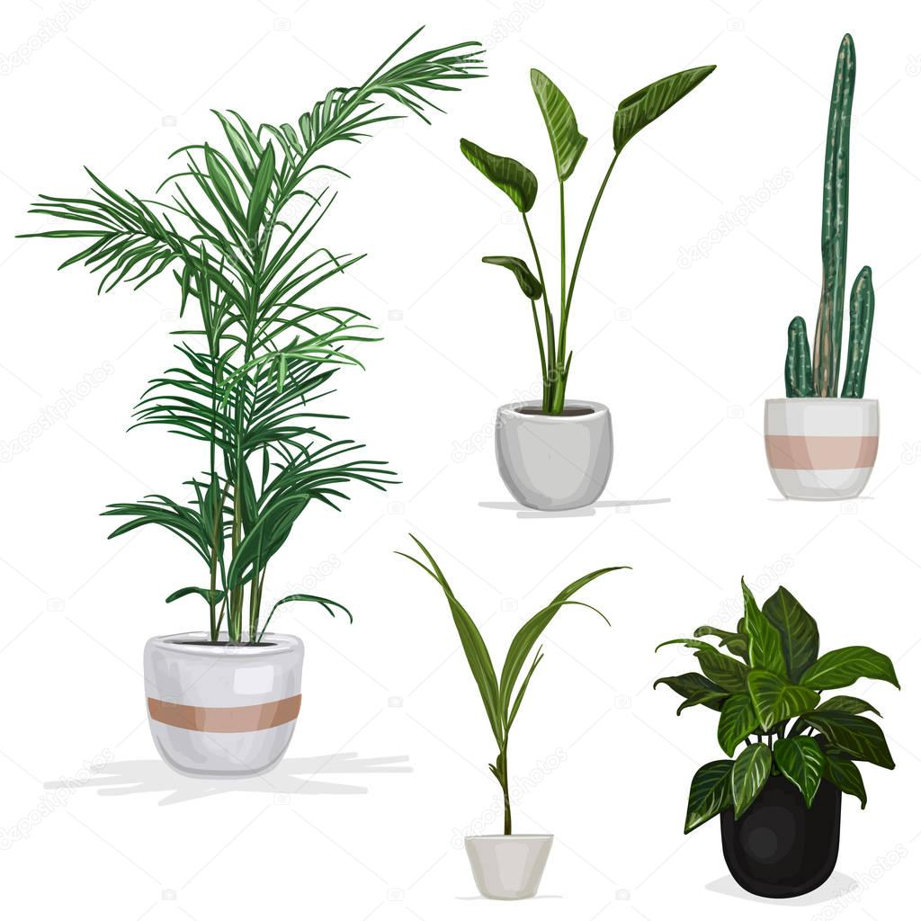 Room plants hand drawn vector illustration