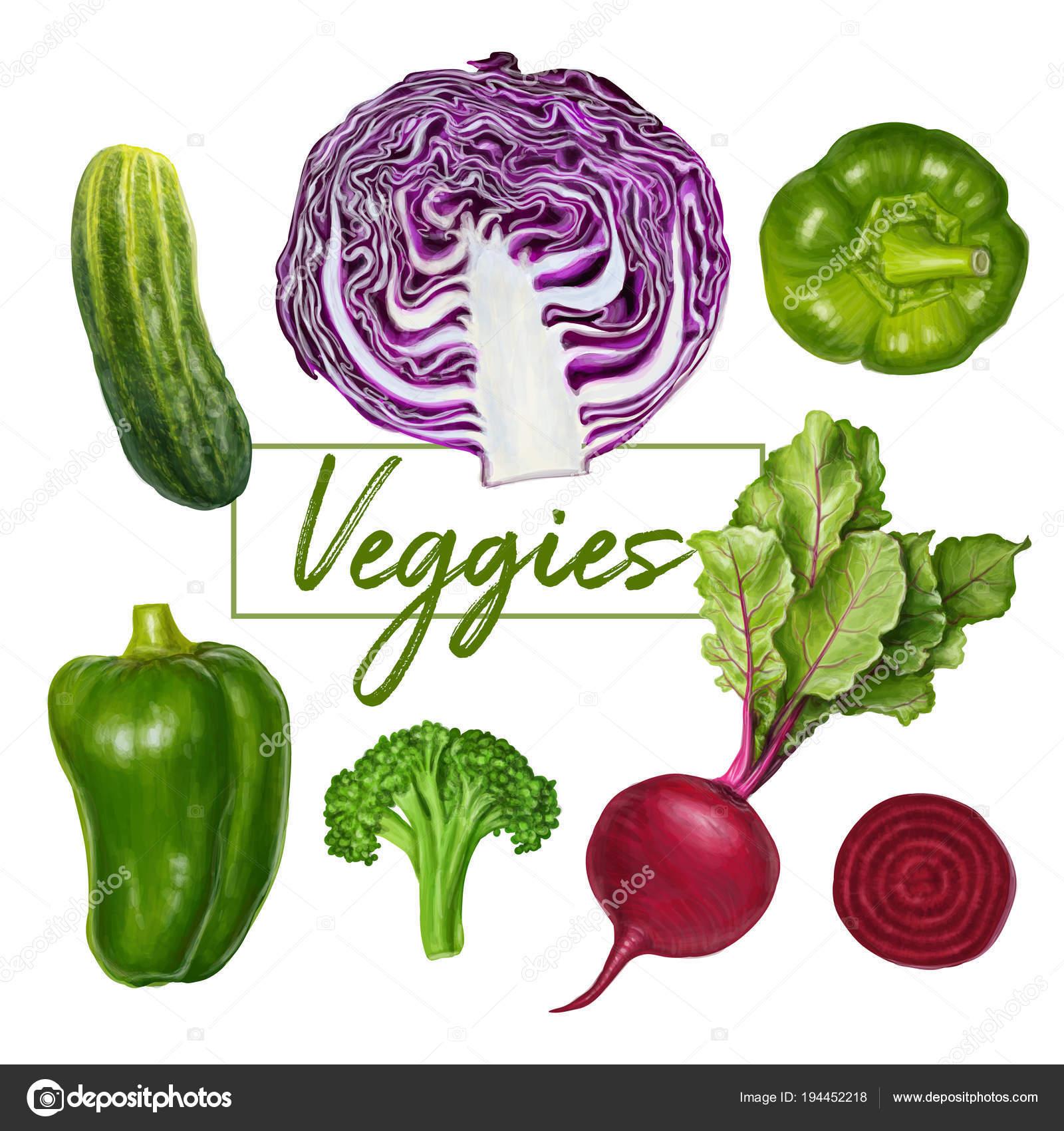 Lecker saftig Vektor Gemüse Malerei — Stockvektor © natalka.dmitrova ...