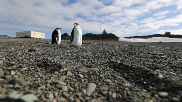 Antarctic penguins stand on pebbles. Andreev.